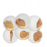 Shells Gold
