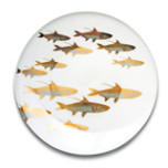School of Fish Gold | Gracious Style