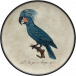 Perroquets Wall Plates | Gracious Style