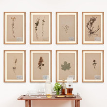 Herbarium Collection | Gracious Style