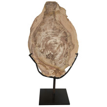"""Wood Fossil with Stand, 12"""" 