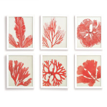 Pink Reef Set of 6 Coral Print Wall Art - Pine Wood/MDF/Paper/Glass | Gracious Style