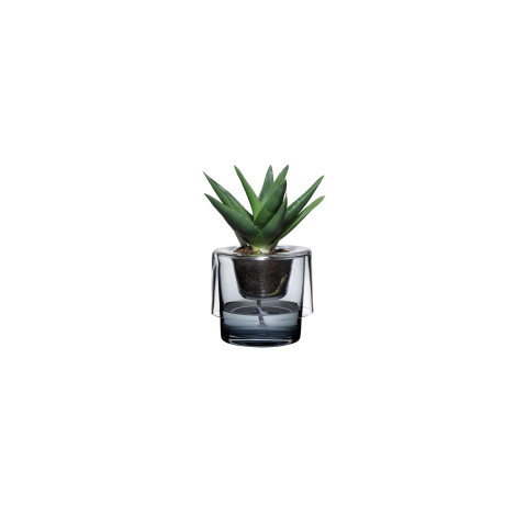 Roots Clear Top, Blue Bottom Herb Pot   Gracious Style